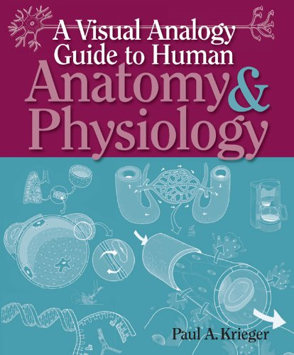 A Visual Analogy Guide to Human Anatomy & Physiology by Paul A. Krieger