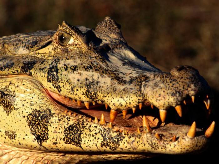 В Мире Животных - Крокодилы