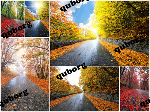 Stock Photos - Autumn Forest Road