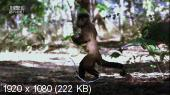 Animal Planet: ������� �������� (6 ����� �� 6-�) / Animal Planet: Mutant Planet (2010/HDTV 1080i)