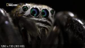 Суперпаук / Super Spider (2012) HDTV 720p