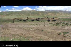 ���� ������ ��� ������� / Vajra Sky Over Tibet (2006) DVDRip-AVC