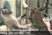 Сборник смешных видео приколов с животными