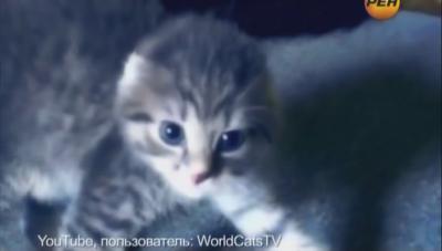 Смотреть всем! (эфир от 22.03.2013) IPTVRip
