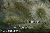 http://i51.fastpic.ru/thumb/2013/0329/5b/bfebacd09010365d8bd7f792aaa7b15b.jpeg