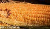 Наука 2.0. Угрозы современного мира. ГМО (2013) SATRip